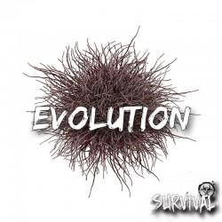 Evolution arôme concentré - Survival
